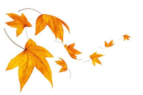 Поздравляем с началом осени! Акция!